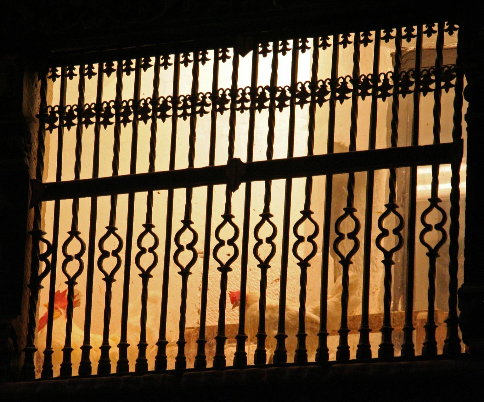 Santo Domingo de la Calzada: les poules... (miracle de Santo Domingo)