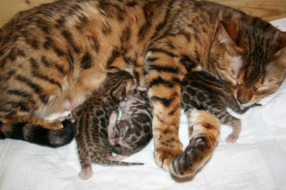 Zufriedene und entspannte Mutter