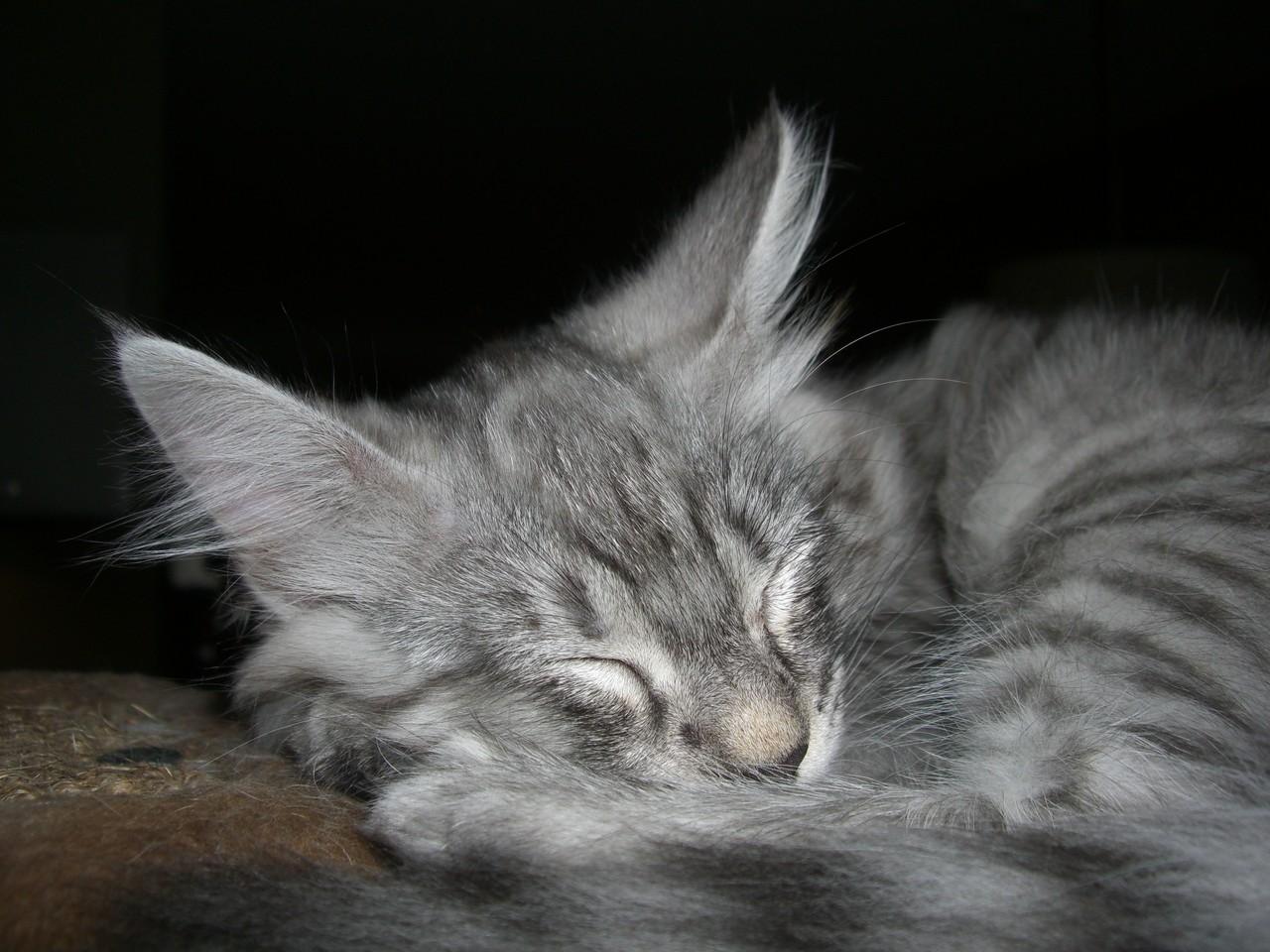 Ollie als kitten