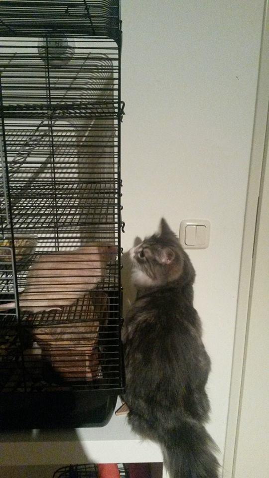 Goed gesprek met meneer Rat.