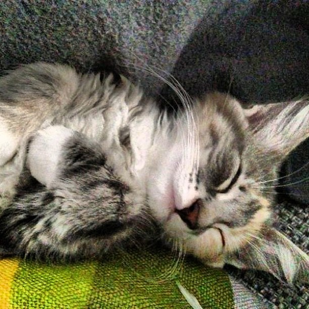 Snurk...