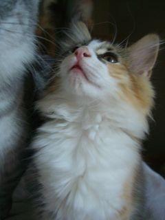Belle (Puma)