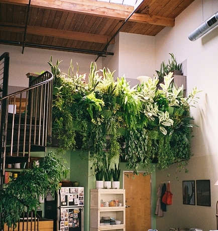Pops Of Green, indoor jungle display PASiNGA Blog