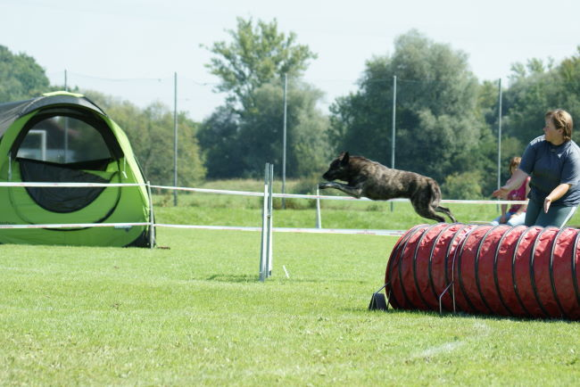 Flying Herder ;o)))
