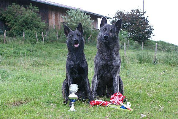 Hier unsere zwei Süssen. Fiby fängt schon früh an Pokale zu gewinnen. Sky gewann auch einen von den begehrten Preisen. Die sind wirklich sehr sehr gelungen:o))