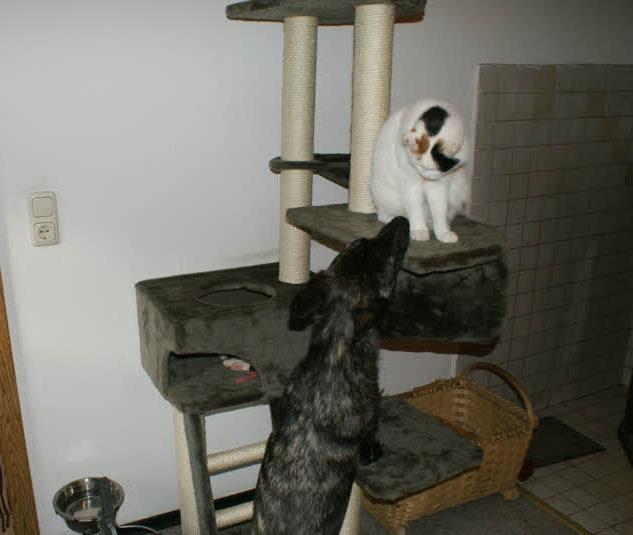 Fiby schaut zur MauMau, warum wird heute kein Foto von mir gemacht;o)  Unsere vier Katzen haben einen neuen großen Kratzbaum bekommen, den sie jetzt schon nicht mehr missen möchten!