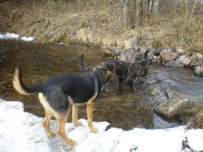 Die drei Hundies im/am Wasser;o)