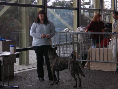 """16.02.2007 Wünschen allen ein schönes Wochenende und genießt die Sonne!!!  Mit Geld kann man einen wirklich guten Hund kaufen, aber nicht sein """"Schwanzwedeln"""""""