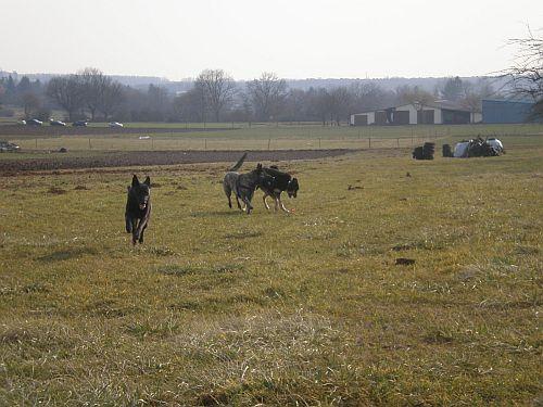Auf diesem Foto sind Fiby, Layla und Kyra zu sehen. Die Hunde hatten wie immer richtig Spaß!
