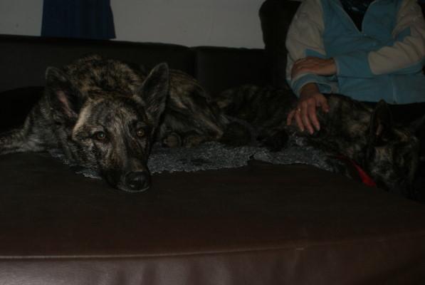 Alice und Arwen schlafen ein bisserl, bis Arwen sie wieder zum spielen aufgefordert hat:-))
