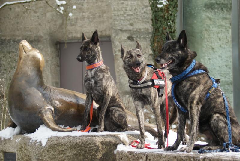 Seehund, Arwen, Alice , Sky