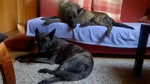 Amigo und seine Schwester Ally