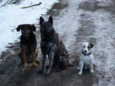 Rocky, Sky und Filou