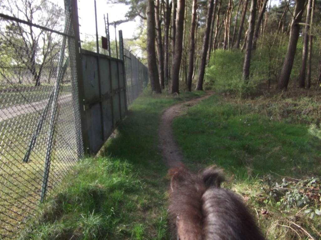Der letzte Weg am Zaun entlang