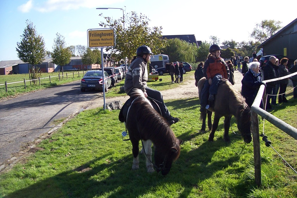 Coole Ponys
