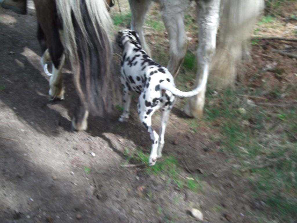 Tim lief am liebsten zwischen Elkes Pferden