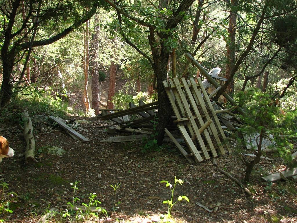 Un joli sous bois transformé en poubelle ( la rage me monte ) par des cons
