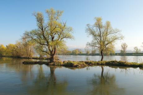 Frühling an der Donau (Foto:Baumgartner)