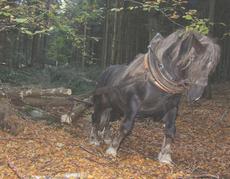 Bubi im Einsatz (Foto: G.Suttner)