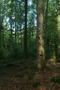 9 ha wunderbarer strukturreicher Wald - ein Besitz mit Verantwortung Foto: Summer