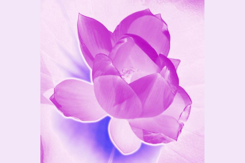 bearbeitete Lotusblume, Dal Lake, Srinagar, Kashmir, Indien - © Art of Moment, Carmen Weder, Fotografie, Bern, Schweiz
