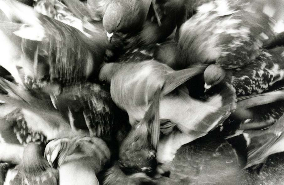 Tauben auf dem Markusplatz, Venedig, © Carmen Weder
