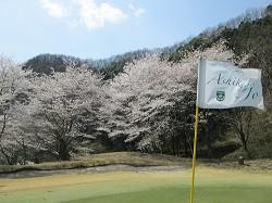 足利城ゴルフ倶楽部の桜