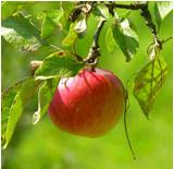 Früchte des Lernens