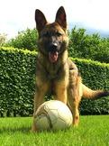 Cwinto lebt bei Willy in Belgien und wird sportlich geführt