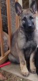 Beast lebt bei Sabine in Meinerzhagen