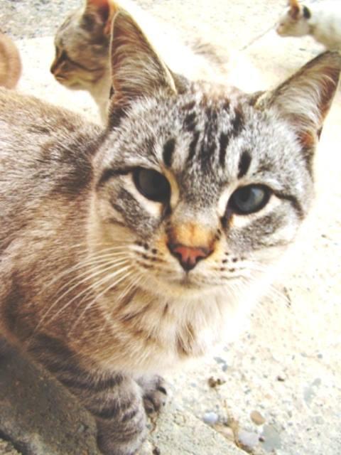 """2004 El Gordo (envenenado??) Vivió 2 años.Hijo de una gata llamada """"Blanca"""" (que murió atropellada)."""