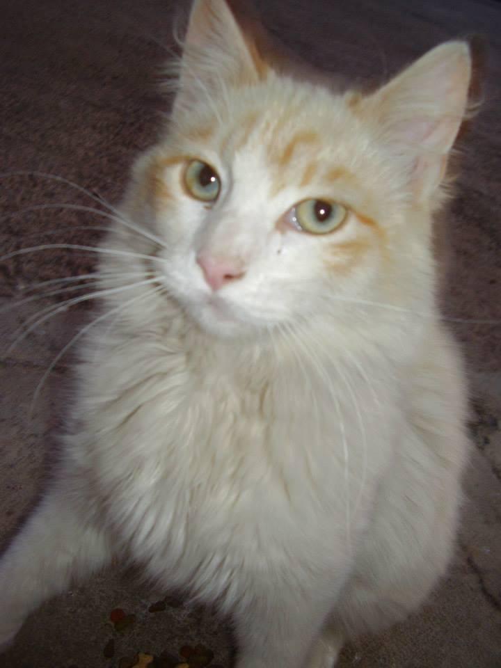 2006 PELUSO, hijo de Rabita, duró 1 año, desapareció en la Fiesta Mayor