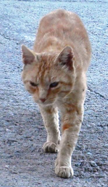 2014 duró 6 años en la calle. Era hijo de la Rabita, salvaje