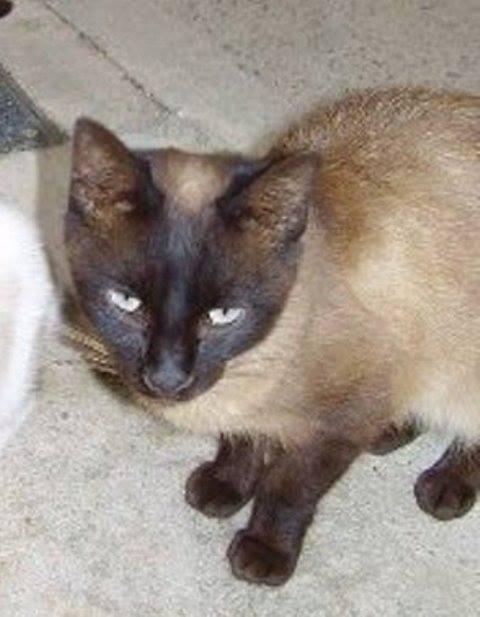 2007, SIAME, atropellada y dejada muerta en la calle. Duró 4 años