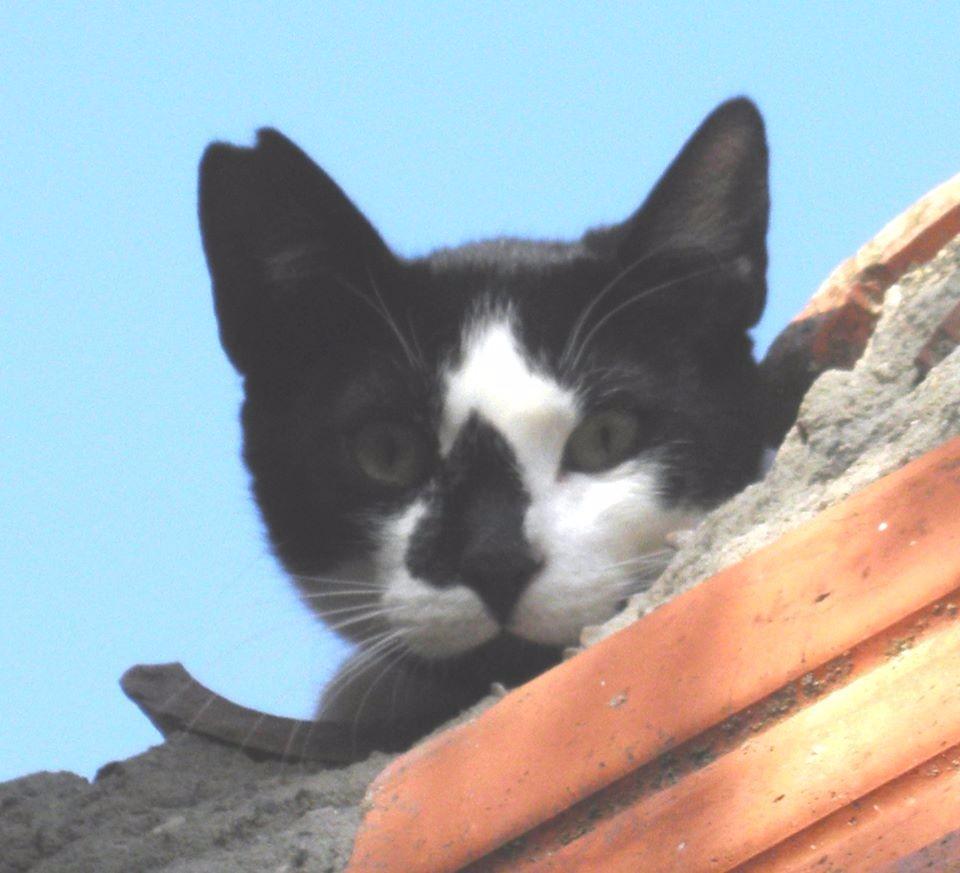 ATILA, también nacido en julio 2013, es miedoso y timido.