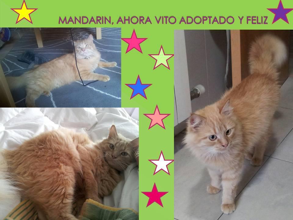 2012 MANDARÍN-VITO, ABANDONADO EN EL PUEBLO