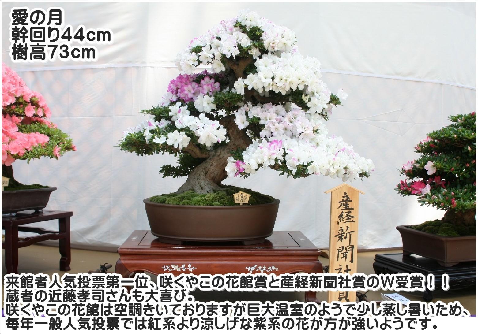 来館者人気投票第1位、咲くやこの花館賞と産経新聞賞のW受賞!蔵者の近藤孝司さんも大喜び。