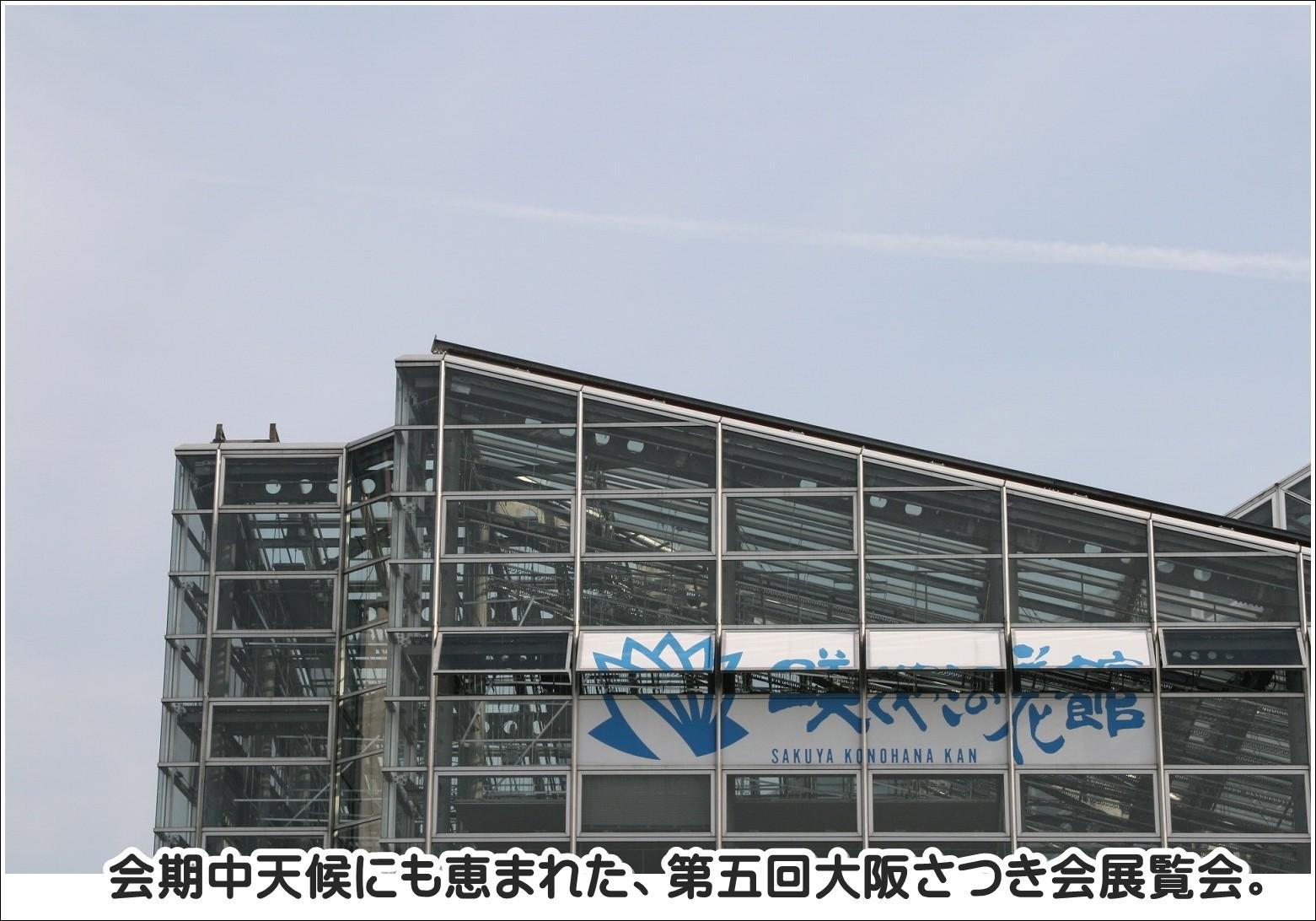 会期中天候にも恵まれた、第5回大阪さつき会展覧会