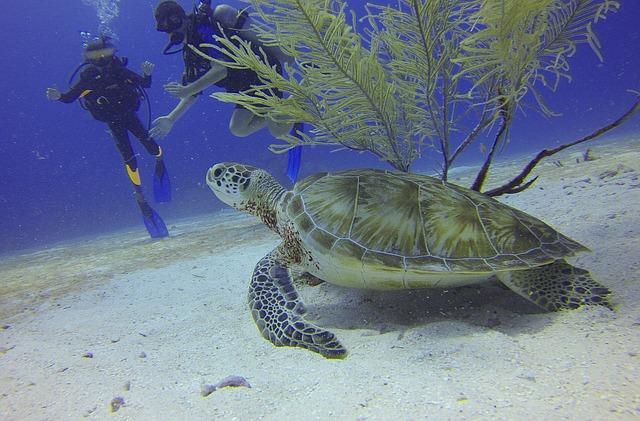 Schildkröte | Tauchen | Rotes Meer