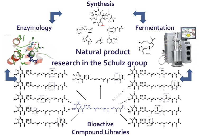 Naturstoff Forschung Natural Products Research - Schulz Laboratory Ruhr-Universität Bochum Polyketide Terpene Terpenoids