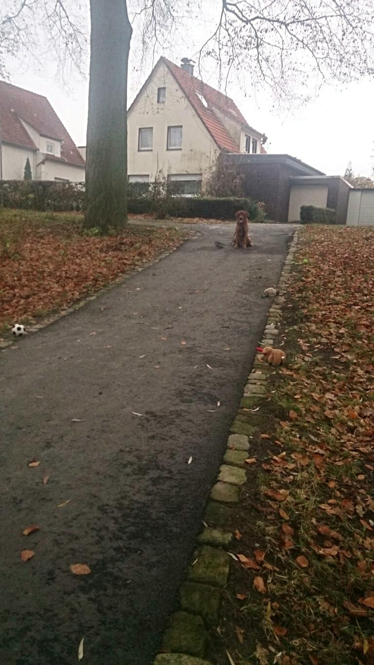 Jo wartet auf den Abruf durch die Spielzeug / Mensch-Hund Gasse