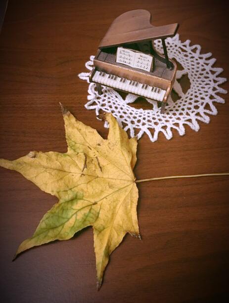 生徒さんが秋の紅葉した葉っぱを持ってきてくれました(^^)