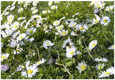 Tauchen Sie ein in die wunderbare Pflanzenwelt ...