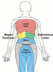 Segmentale Innervation