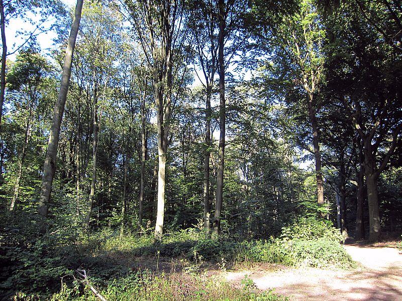 forstwirtschaftlich genutzter Wald mit gemischten Baumbeständen