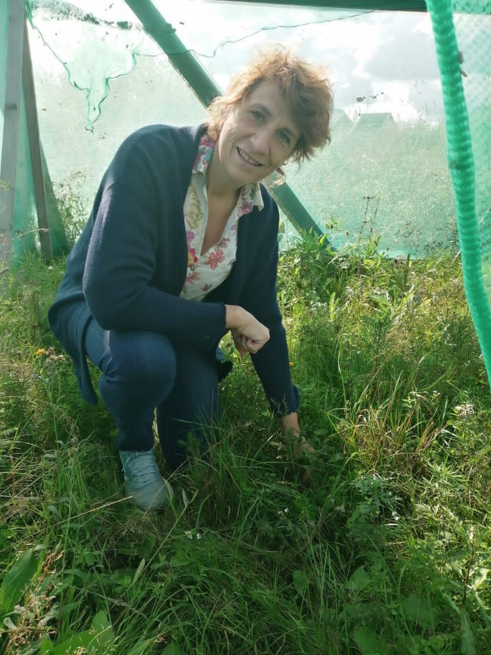 Forêts froides - Savez-vous planter des...arbres ? #3