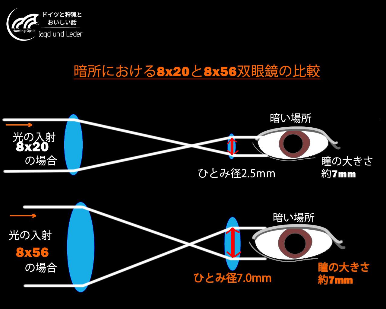 狩猟用の双眼鏡といえば8x56。ハチゴーロクと呼びます。