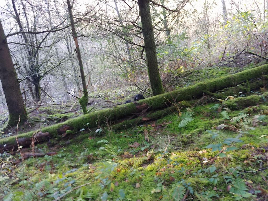 ドイツの巻き狩り猟