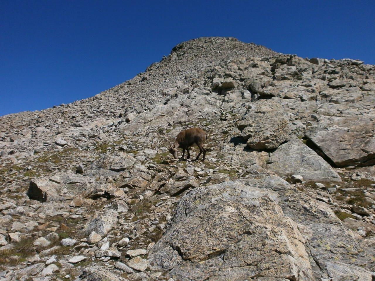 Cime de Pagari (2905 m)