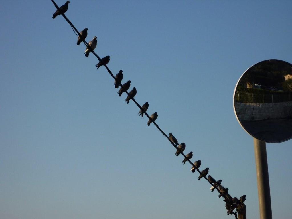 Les oiseaux.....